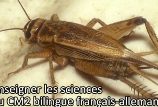 Enseigner les sciences au CM2 bilingue